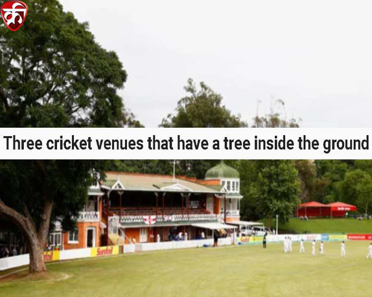 Three cricket venues that have a tree inside the ground